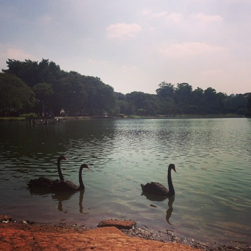 #nature #park #run #health   (em Parque Ibirapuera)