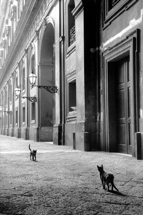 undr:  Leonard Freed Italy. Naples. 1958.