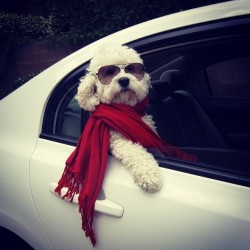 9gag:  I'll never be as classy as this dog