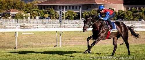 The J&B Met gallops. Karis Teetan riding Jackson for Brett Crawford Racing