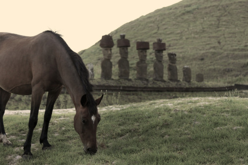 animal-obsession:  Easter Island Horse - MattJP One of the wild horses grazing on Anakena Beach, the finest shore on Easter Island. The Moai look on.