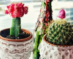 some cacti i planted this weekend <3