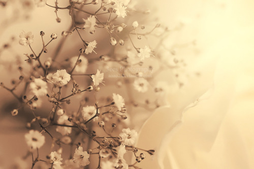 mochimoo:  tiny flowers by *aoao2 i think this would be a good cover photo