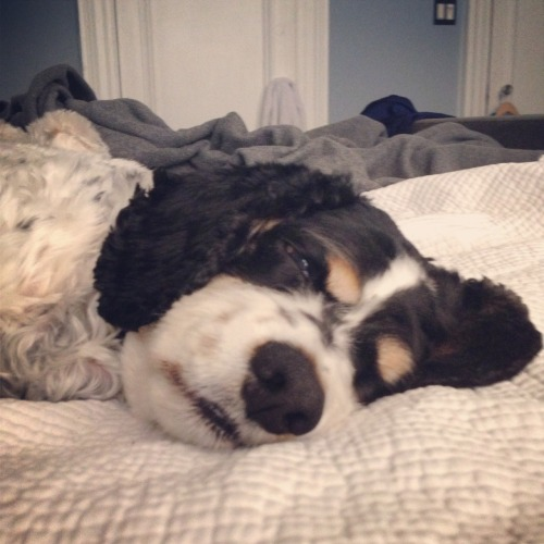 woodythedog:  I'm gonna snooze for another day. Thanks.