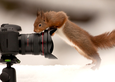How Wide is the Lens? Photo by Giedrius Stakauskas