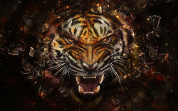 wallpapers-free:  Tiger Artwork