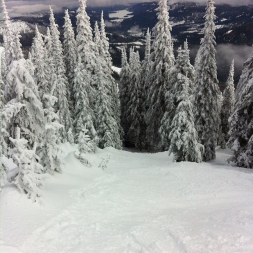#lucky #MtSpokane #shred #beautiful #mothernature #trees #snowboard #forlife