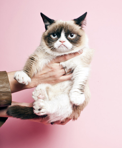 setbabiesonfire:  svturday:   Grumpy cat gets a professional photo shoot at Time.  good  she looks so ecstatic