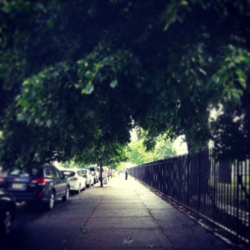 #trees #leaves #green  #summer #shade #pavement #park #light #bushwick #Brooklyn #NY