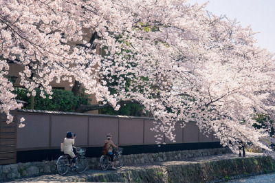 Cherry Blossom @ Kyoto by SILENCE Vincent on Flickr.