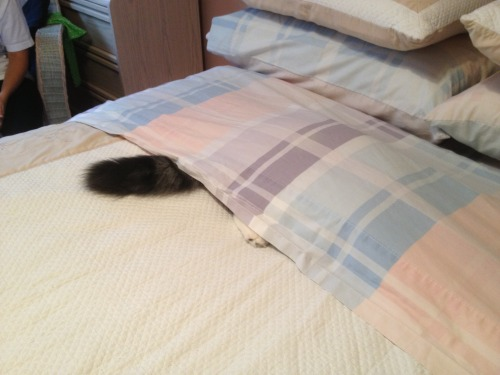 mylittlefurballs:  She thinks we can't see her.