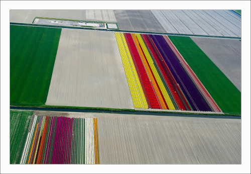 thejaymo:  Flying over the Tulips Fields in Anna Paulowna it looks like the earth corrupted and stopped rendering correctly