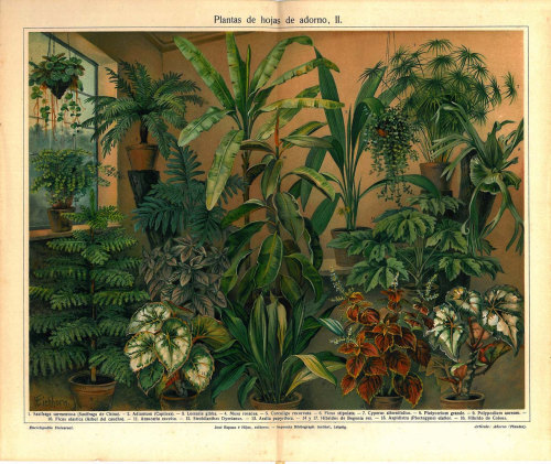 Houseplants Antique Print Lithograph 1923 Ferns Papyrus Palm Indoor Plant at CarambasVintage http://etsy.me/15ScqMt