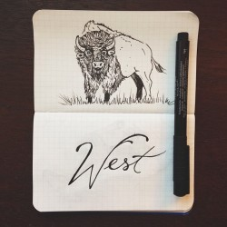 Quick sketches tonight. #Bison #FieldNotes #art