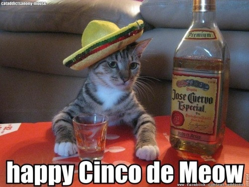 Happy Cinco de mayo ;)