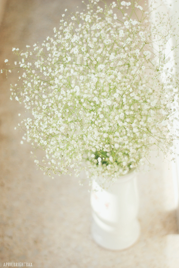 lovelyasadream:  Pretty morning light (by April BrightBax) flowers + light = heaven =)