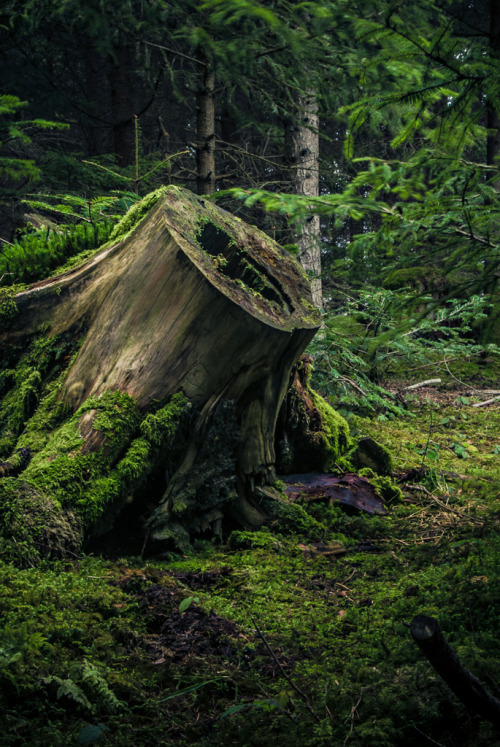 the-enchanted-mermaid: The lush green velvet cover of the forest calls to me deep within. ~ Charlotte (PixieWinksFairyWhispers)