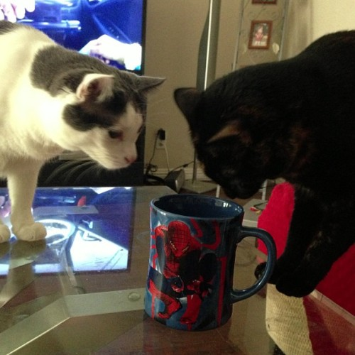 One does not simply leave a cup of water unattended around cats.