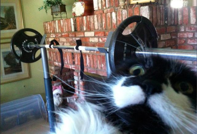 "funny-pictures-uk:  ""Do you even lift, bro!!"""