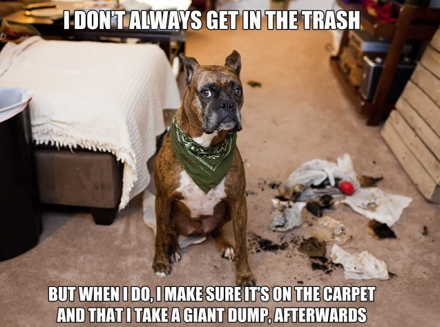 dogshaming:  I don't always get in the trash  I don't always get in the trash but when I do, I make sure it's on the carpet and that I take a…  View Post