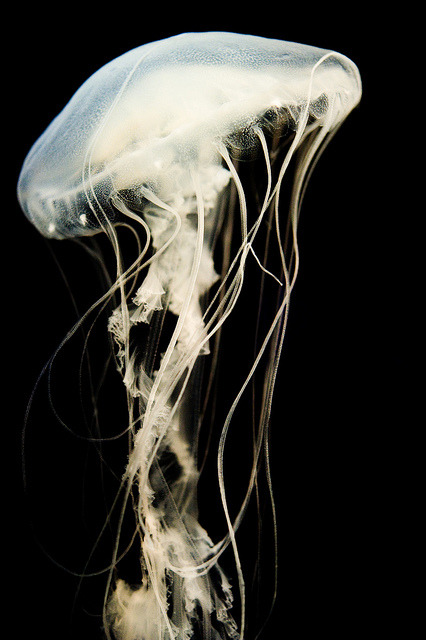 earthlynation:  Jellyfish