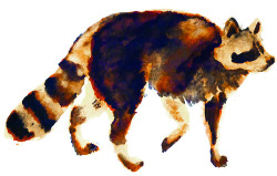 raccoon. watercolors/multimedia. brendan garbee