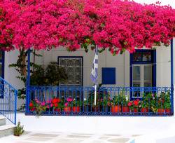 Facade with bougainvillea - Tinos Island, Cyclades, Greece | by Marite2007