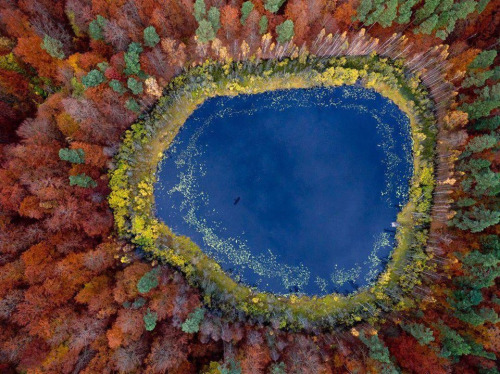 aaronyeatman:  Autumn in Poland