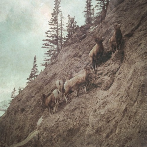hallwood:  #mountaingoats