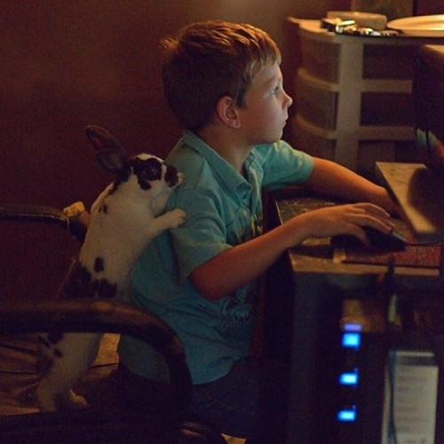 9gag:  My nephew and pet bunny on his computer..🐰