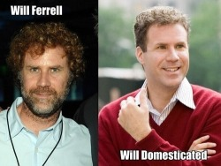 Will Ferrell/Will Domesticated.