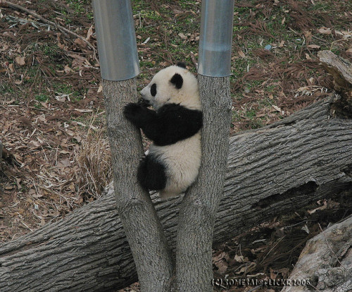 "haveueverlovedawoman:  I think I'll ""Stick"" here by somesai on Flickr. Tai Shan"