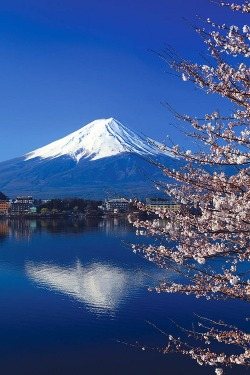 x-enial:  Beautiful cherry blossoms with Mount Fuji, Japan