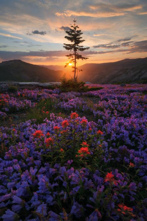 renamonkalou:Eruption Construction📷Cody Wilson   Mt St Helens