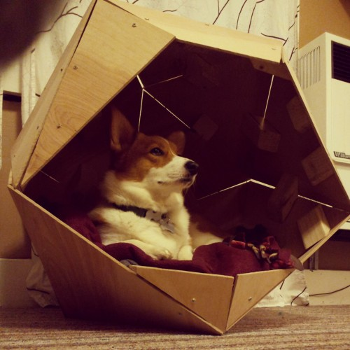 corgiaddict:  Mochi enjoying her new digs. oh my corgi! what cool digs!  want