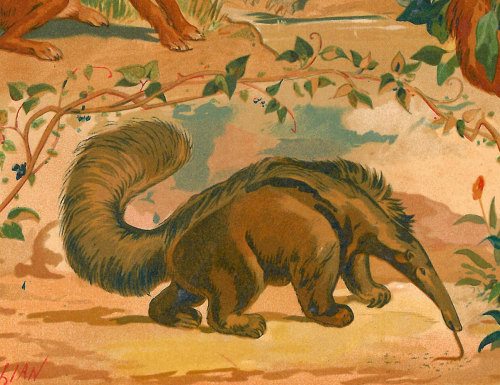 aycarambas:  1883 Antique Rodents and Edentata Chromolithograph Mammals Print at CarambasVintage http://etsy.me/1442uzk