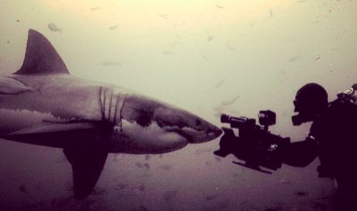 Our team had the honor to collaborate with one of the best underwater shark cinematographers in the world this week in Big Sur, California! Andy Casagrande swims side by side with great white sharks and NO cage. Respect!!! Collaborating with National Geographic and Subaru along with the insanely talented RC Helicopter team from Snaproll Media we created an incredible story about Andy's passion to film sharks around the world.