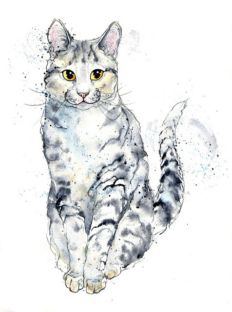Silver Tabby Study on Flickr.