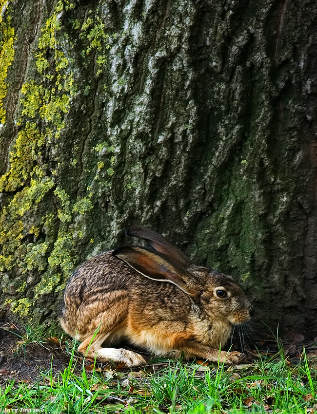 marjoleinhoekendijk:  funkysafari:  Jack Rabbit Coyote Hills Regional Park, Fremont California by Jerry Ting  ☽☉☾ Pagan, Viking, Nature and Tolkien things ☽☉☾