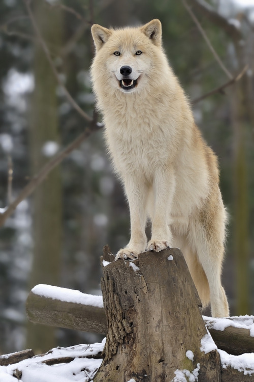 llbwwb:  King of the World! (by josefgelernter)