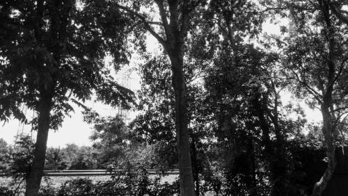 Backyard Trees & Power Lines