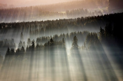 zerographical:  Forests Drenched in Light and Fog by Boguslaw Strempel
