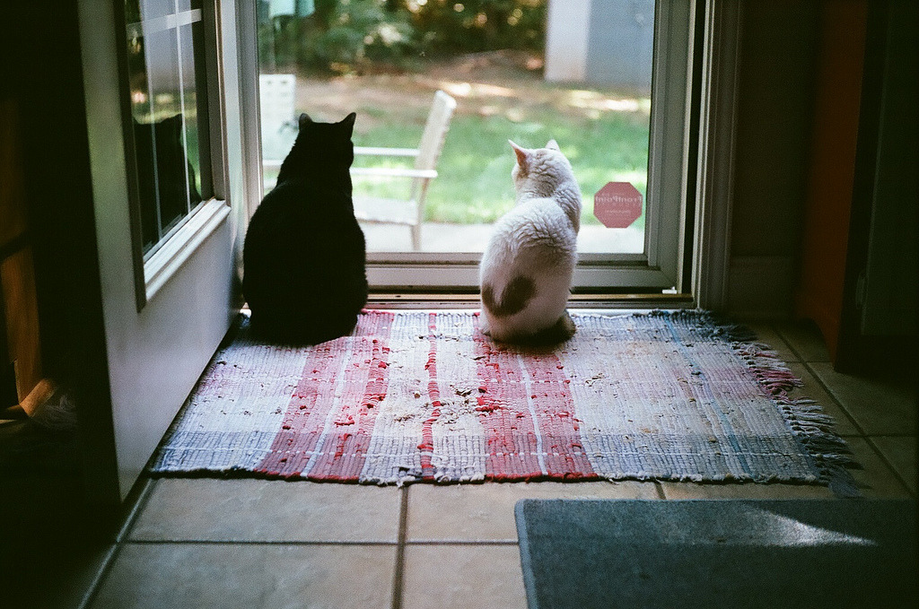 lackingly:  Black Kitty and Sleepy at the back door (by Alowisney)