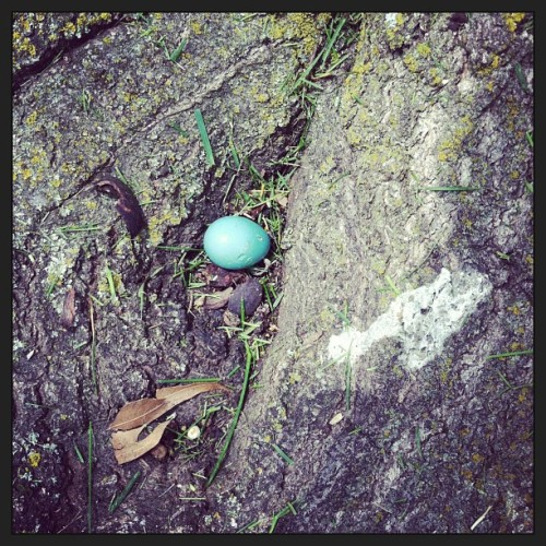 Found a Robins egg at work today.