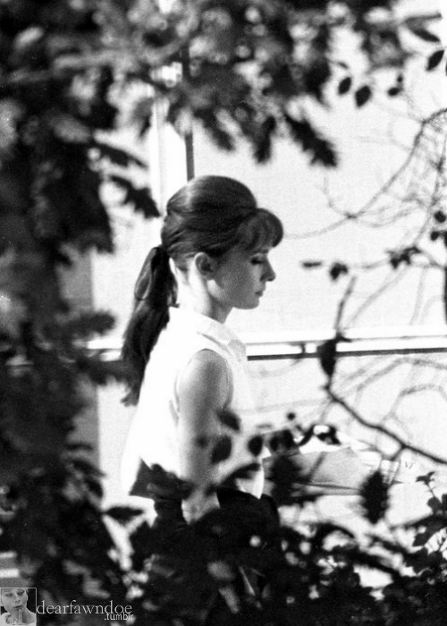 dearfawndoe:  Audrey Hepburn, a candid photo from November 1961.