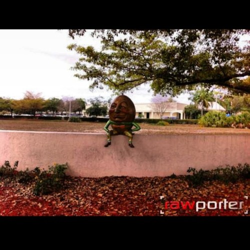 #humptydumpty sitting on the #coralsprings wall! Hey! #Download the #app @rawporter in the #ios market! After you've created your account, start #uploading #videos #audio and #photos into the #media stream! Your #pictures of #athletes #sports #celebrities the #weather and #hyperlocal #news will make you #money! Www.Rawporter.com (at Coral Springs, Fl)