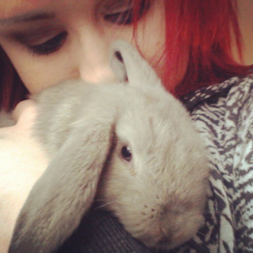 I got myself a baby today. What should I name him? #bunny #rabbit #animal #cute #adorable #redhair #lesbian