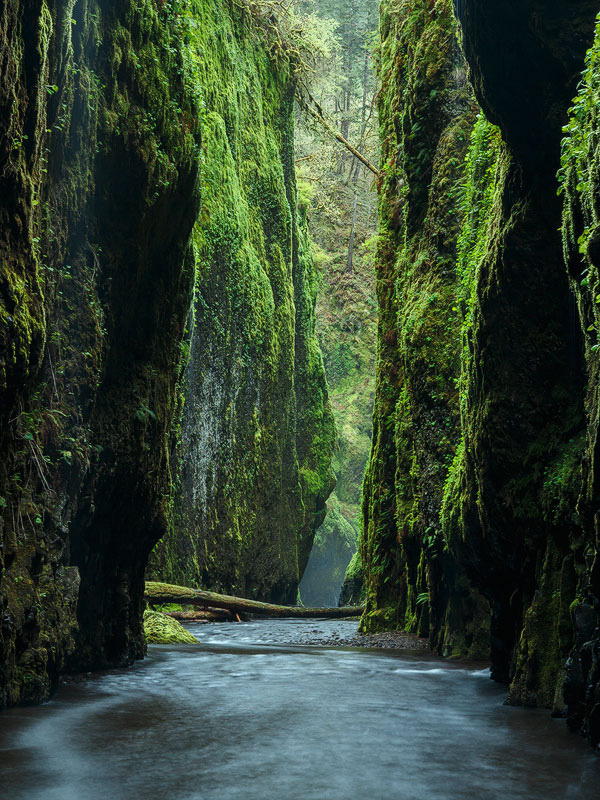 woodendreams:  (by alan howe)  Oneonta Canyon #Oregon #US