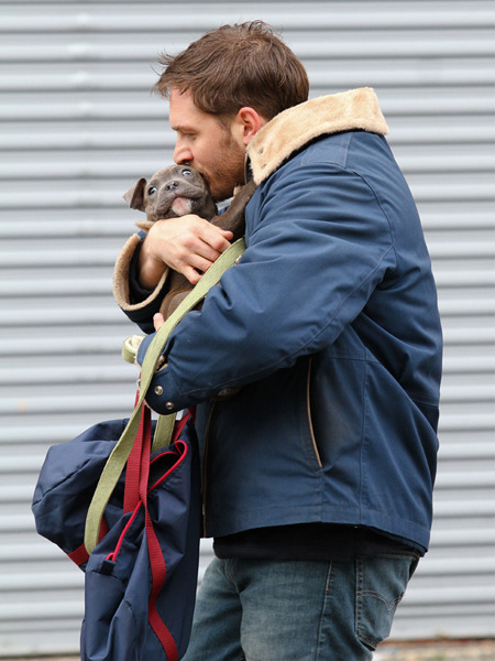 gq:  Tom Hardy, nurturing a puppy. You have our permission to Aww.