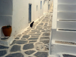 Alley and Cat - Naoussa, Paros Island, Cyclades, Greece | by Marite2007